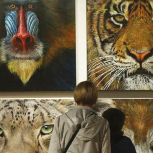 Public view Wildlife Artist of the Year exhibition artworks
