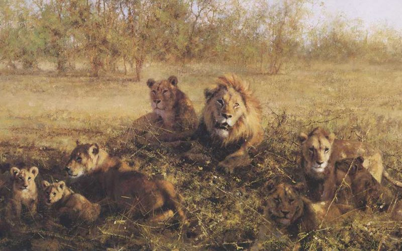 buy david shepherd paintings for conservation