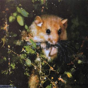 David Shepherd, Limited Edition - Dormouse Print