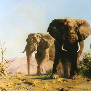 David Shepherd Open Edition - Elephant Print