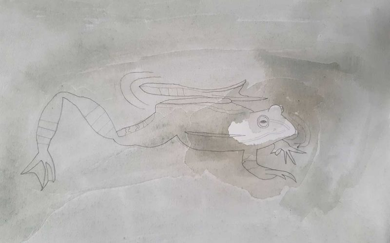 Wildlife Artist of the Year 2020 competition entry - Frog in Pencil and Watercolour