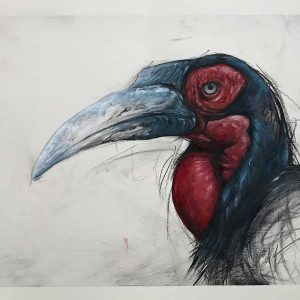 Wildlife Artist of the Year 2020 competition entry hornbill artwork in charcoal and oil