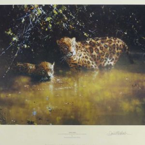 David Shepherd, Limited Edition - Jaguars Print