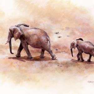 buy painting of two elephants by mandy shepherd