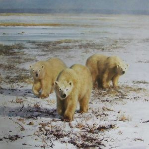 David Shepherd, Limited Edition - Polar Bears Print
