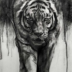 Wildlife Artist of the Year 2020 entry - Tiger in Charcoal