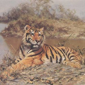 David Shepherd, Limited Edition - Tiger Print