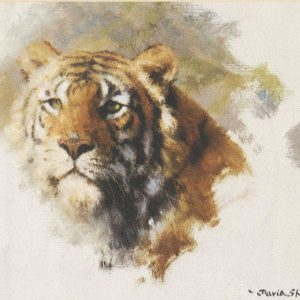 David Shepherd, Limited Edition - Tigers Head Print