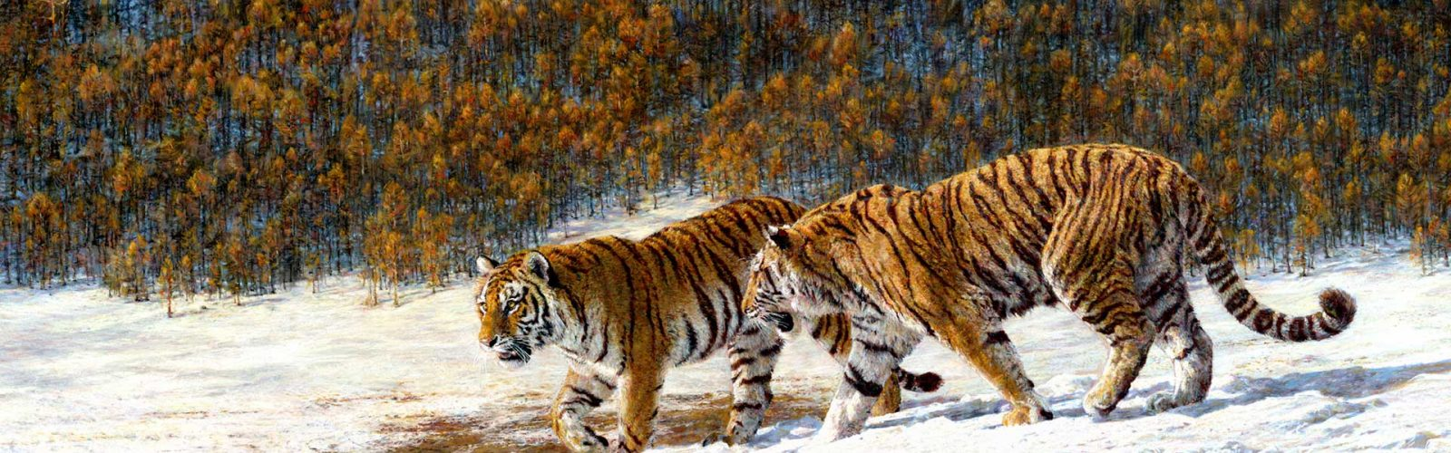 pastel drawing of amur tigers