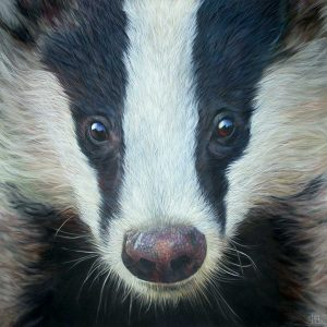 Badger oil painting entry in Wildlife Artist of the Year 2020