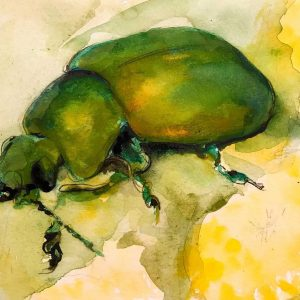 Beetle watercolour painting entry in Wildlife Artist of the Year 2020