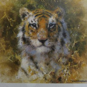 David Shepherd Limited Edition - Bengal Tiger Print