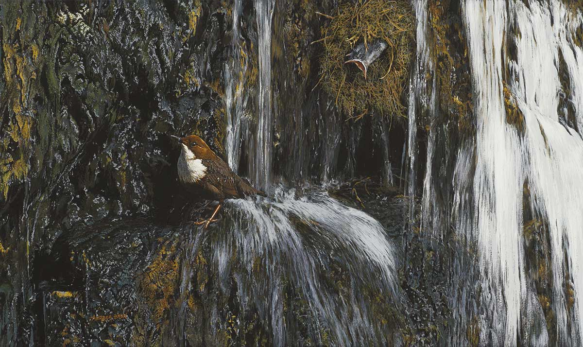 Bird gouache and watercolour painting entry in Wildlife Artist of the Year 2020