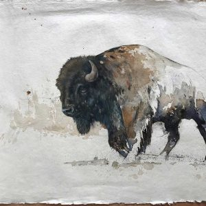 Bison in coffee and ink painting entered in Wildlife Artist of the Year 2020