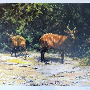 David Shepherd, Limited Edition - Bongo Buck Print