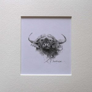 Buy a print of a David Shepherd pencil sketch of a Buffalo