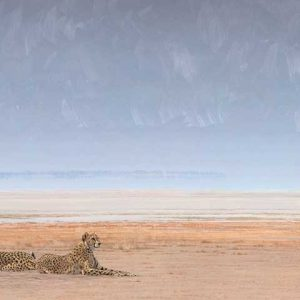 Cheetah in oil entry in Wildlife Artist of the Year 2020