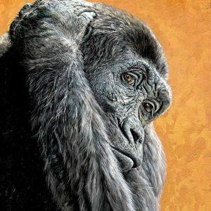Wildlife Artist of the Year 2020 competition entry, Chimpanzee oil painting