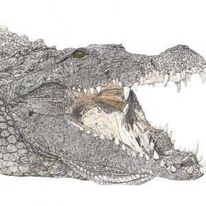 Wildlife Artist of the Year 2020 competition entry - Crocodile in ink