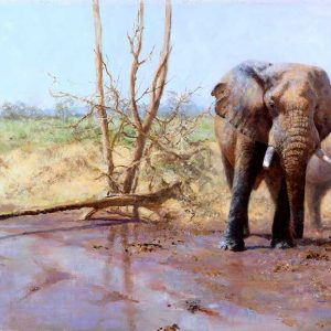 David Shepherd Limited Edition - Elephant Print