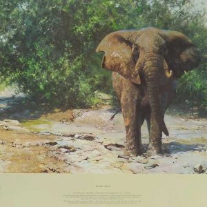 David Shepherd, Limited Edition - Elephant Print