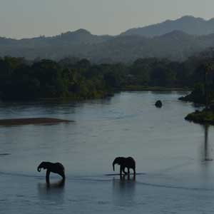photograph of elephants in a river