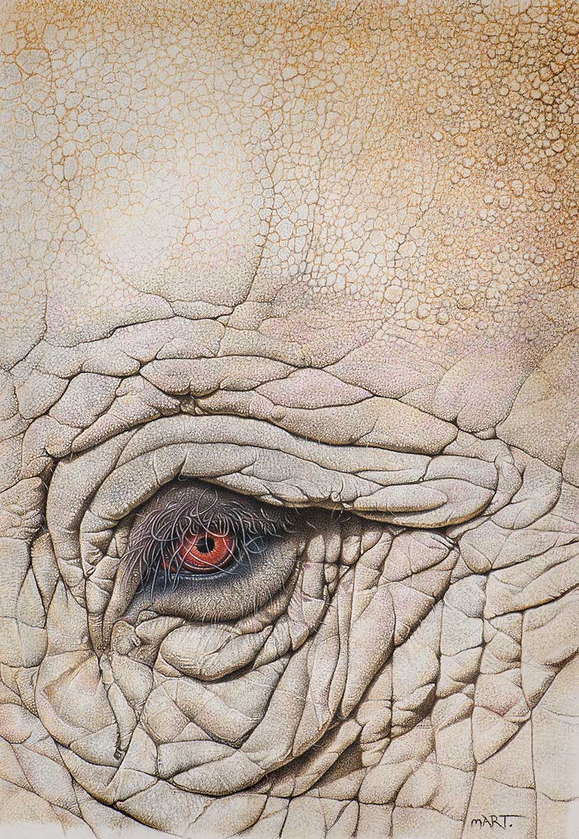 Elephant pastel pencil artwork entry in Wildlife Artist of the Year 2020