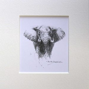 buy a print of a David Shepherd pencil sketch of a elephant