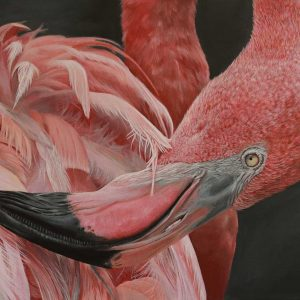 Flamingo acrylic entry into Wildlife Artist of the Year