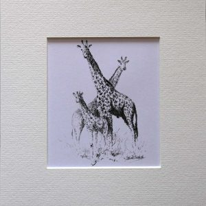 Buy a print of a David Shepherd pencil sketch of a Giraffe