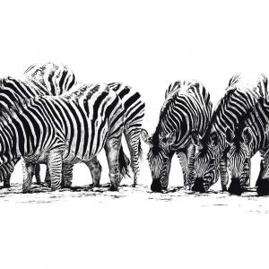 Black and white painting of zebras at a waterhole by Cory Salmond