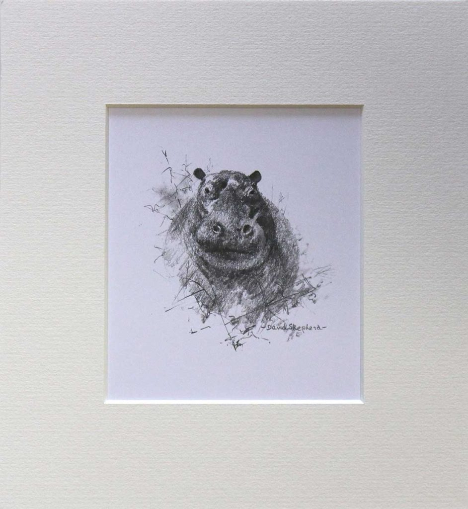 buy a print of a david shepherd pencil sketch of a hippopotamus