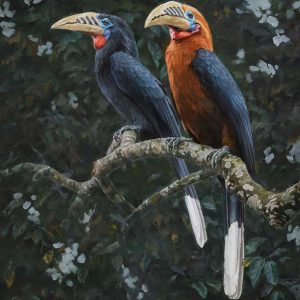 Rufous-necked hornbill oil painting entry in Wildlife Artist of the Year 2020