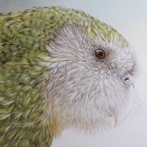 Kakapo oil on linen entry in Wildlife Artist of the Year 2020