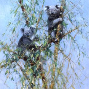 David Shepherd Limited Edition Koala's Print