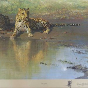 David Shepherd prints and original painting - Leopard