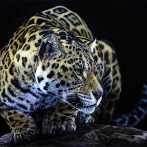 Wildlife Artist of the Year 2020 competition entry - Leopard in Acrylic and Resin