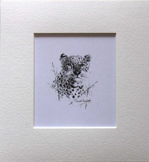 Buy a print of a David Shepherd pencil sketch of a Leopard