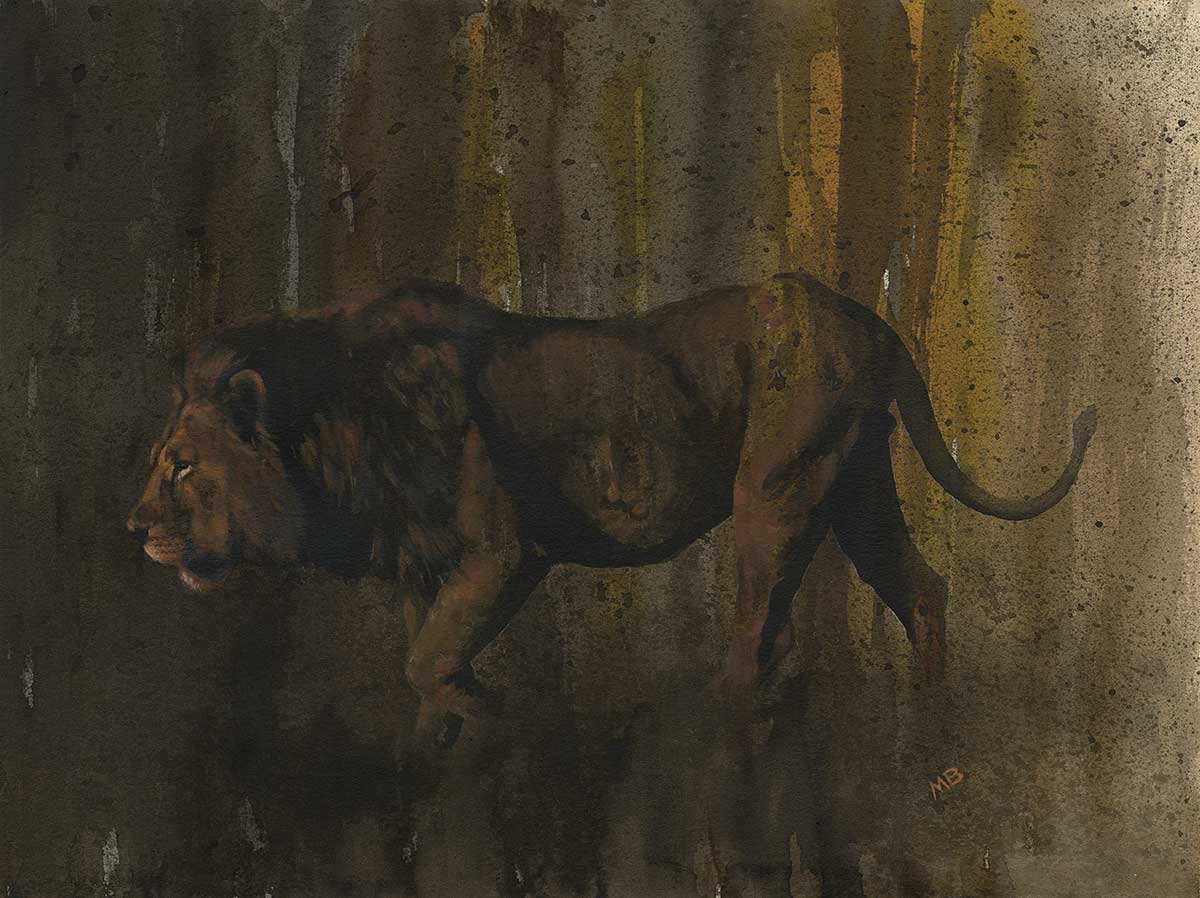 Lion ink artwork by Wildlife Artist of the Year 2020
