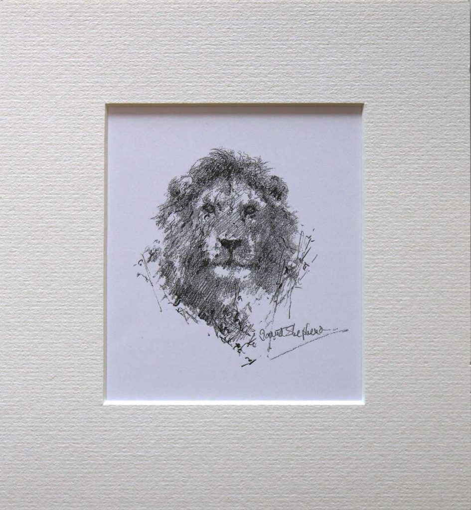 buy a print of a david shepherd pencil sketch of a lion