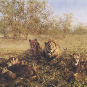 David Shepherd, Limited Edition - Lions Print