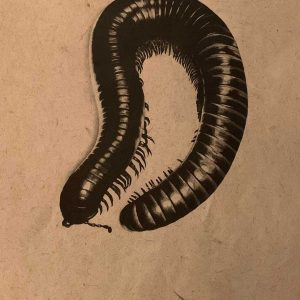 Millipede graphite artwork entered in Wildlife Artist of the Year 2020