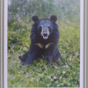 David Shepherd Limited Edition - Moon Bear Print