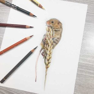 Wildlife Artist of the Year 2020 competition entry - Mouse in coloured pencil