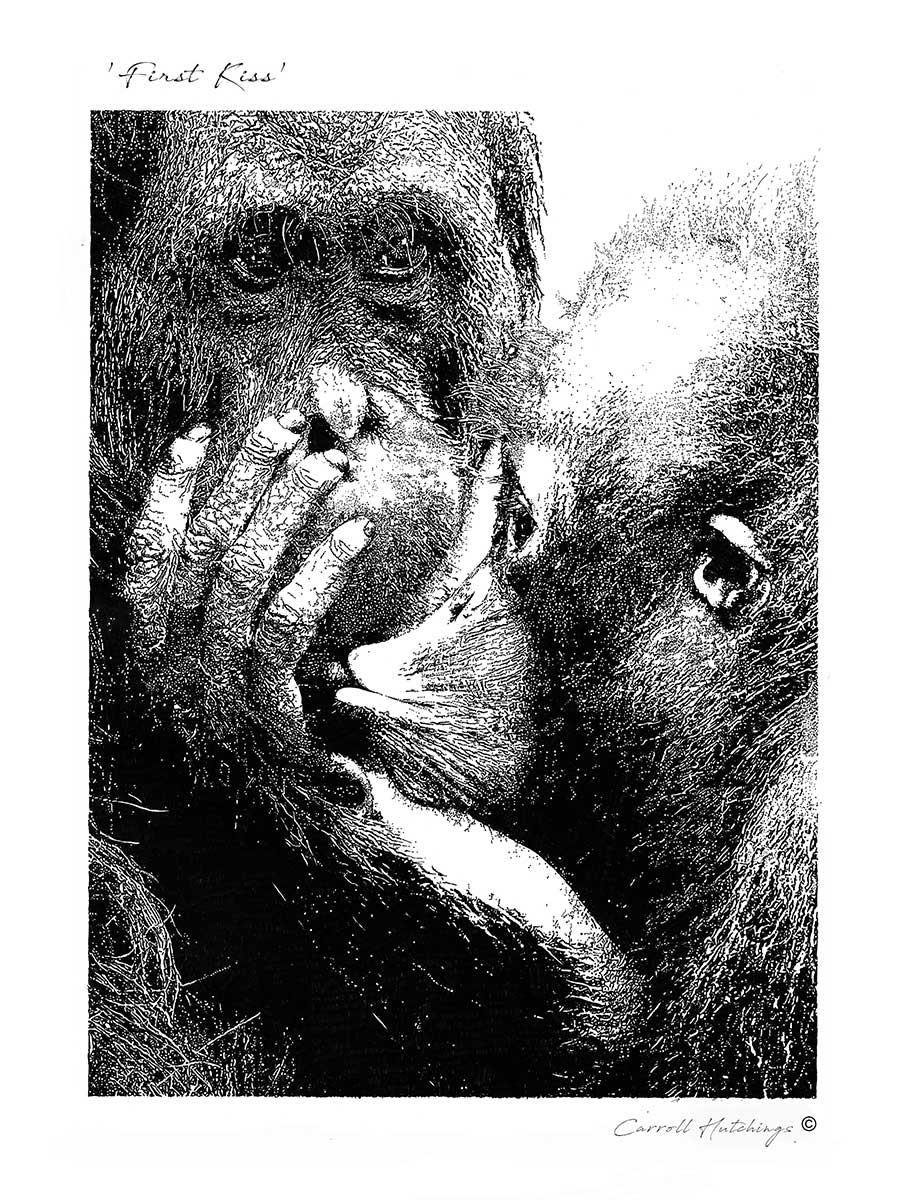 Orangutan, pen and ink painting entry in Wildlife Artist of the Year 2020