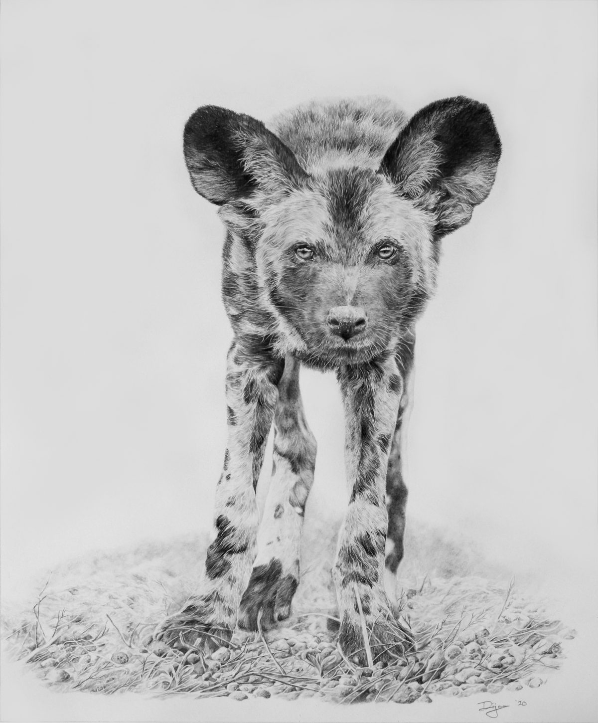 Painted Dog pencil on paper entry in Wildlife Artist of the Year 2020