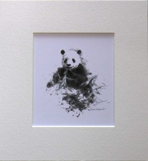 Buy a print of a David Shepherd pencil sketch of a Panda