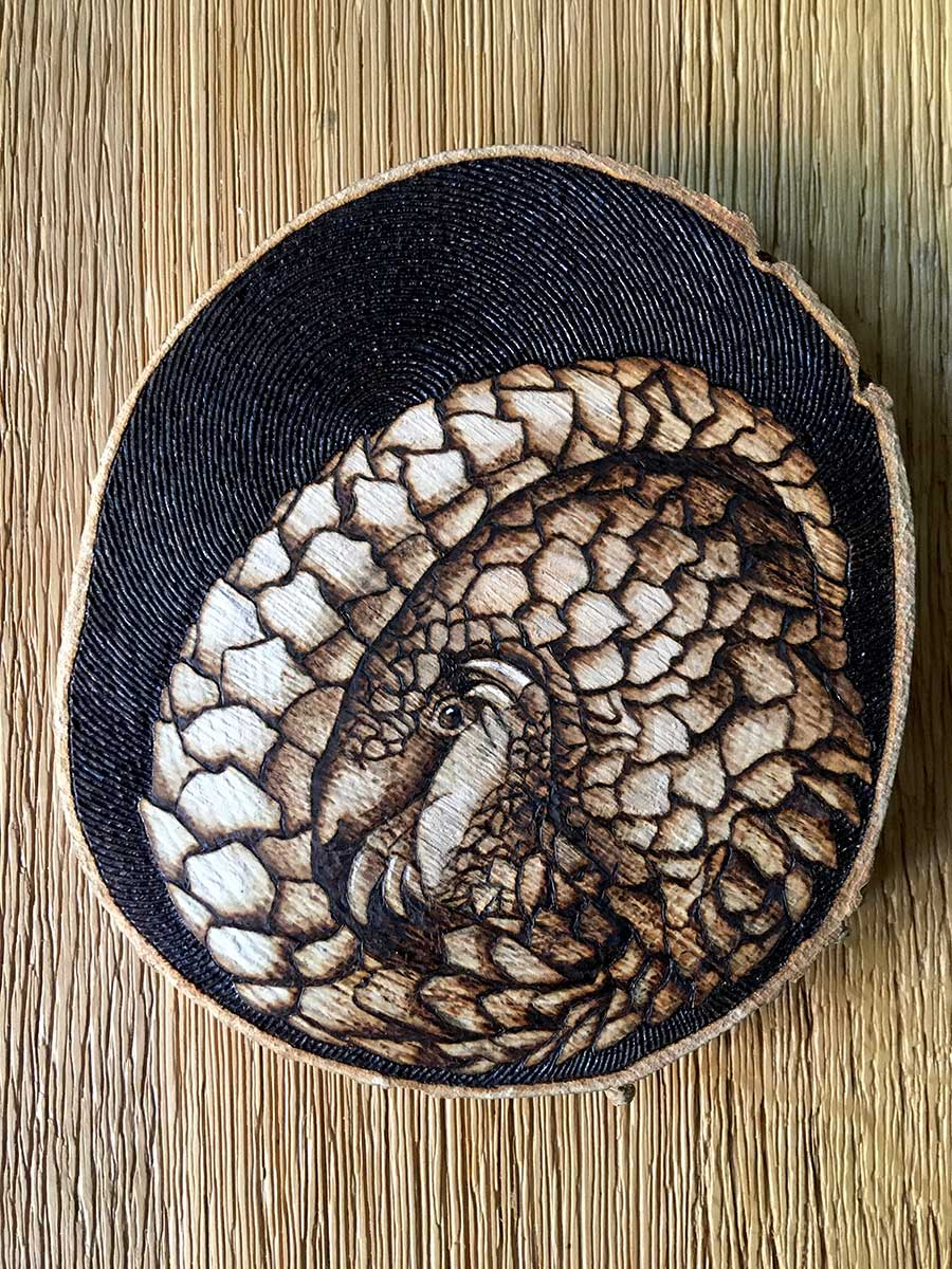 Pangolin pyrography artwork entered Wildlife Artist of the Year 2020