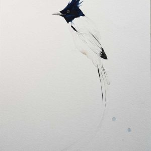 Paradise Flycatcher Gouache entry into Wildlife Artist of the Year 2020