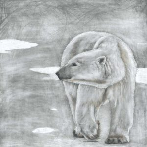Polar Bear coloured pencil artwork entered Wildlife Artist of the Year 2020